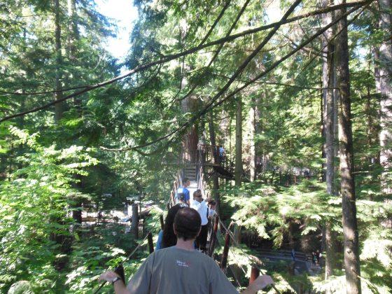 Passeio por passarelas suspensas entre as árvores